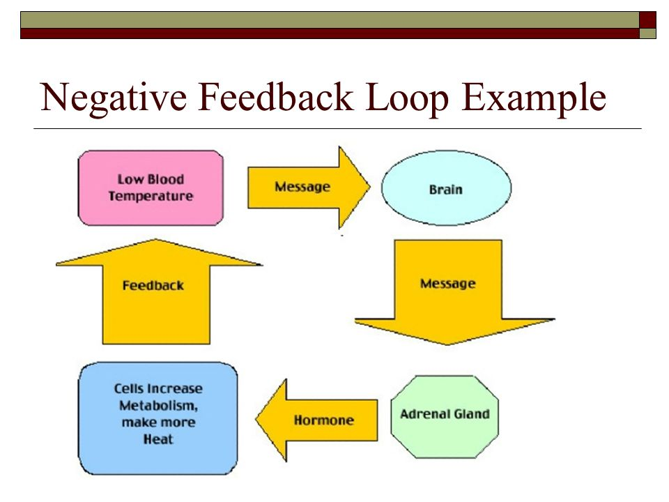 Negative Feedback Simple Definition Wiring Diagrams ...