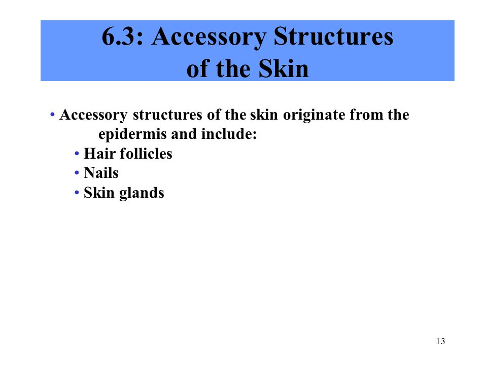 6.3: Accessory Structures of the Skin
