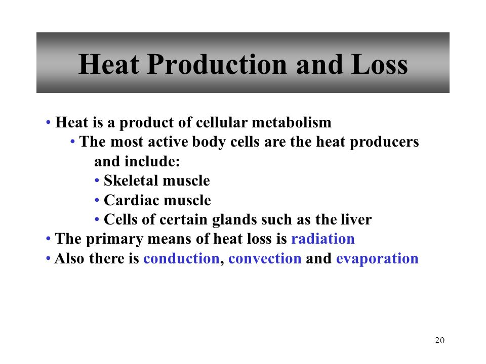 Heat Production and Loss