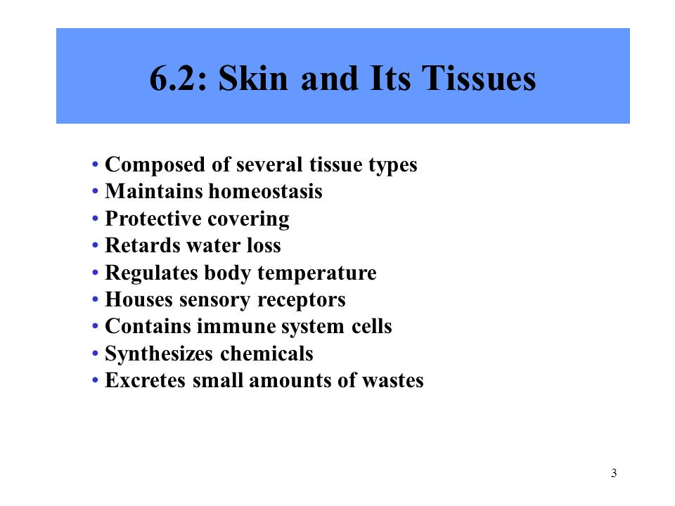 6.2: Skin and Its Tissues Composed of several tissue types
