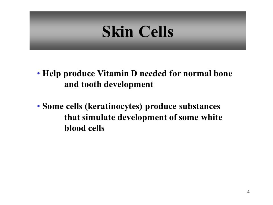 Skin Cells Help produce Vitamin D needed for normal bone and tooth development.