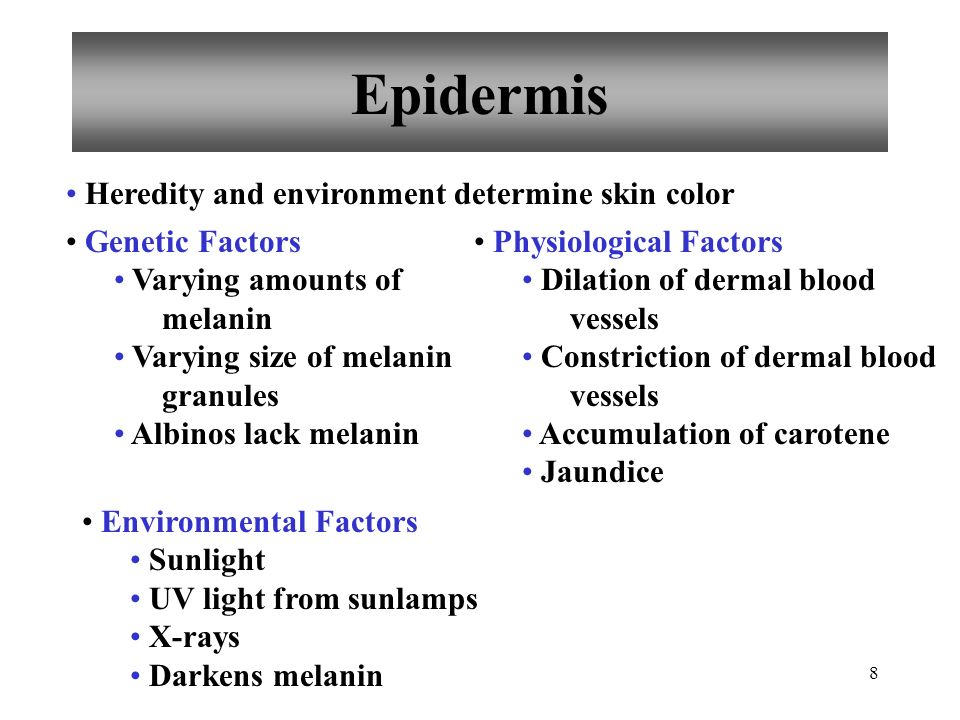 Epidermis Heredity and environment determine skin color