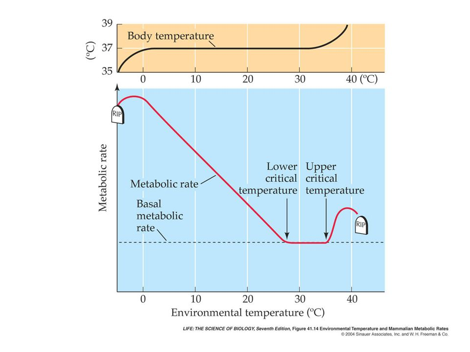 How To Keep Room Temperature Constant In An Experiment