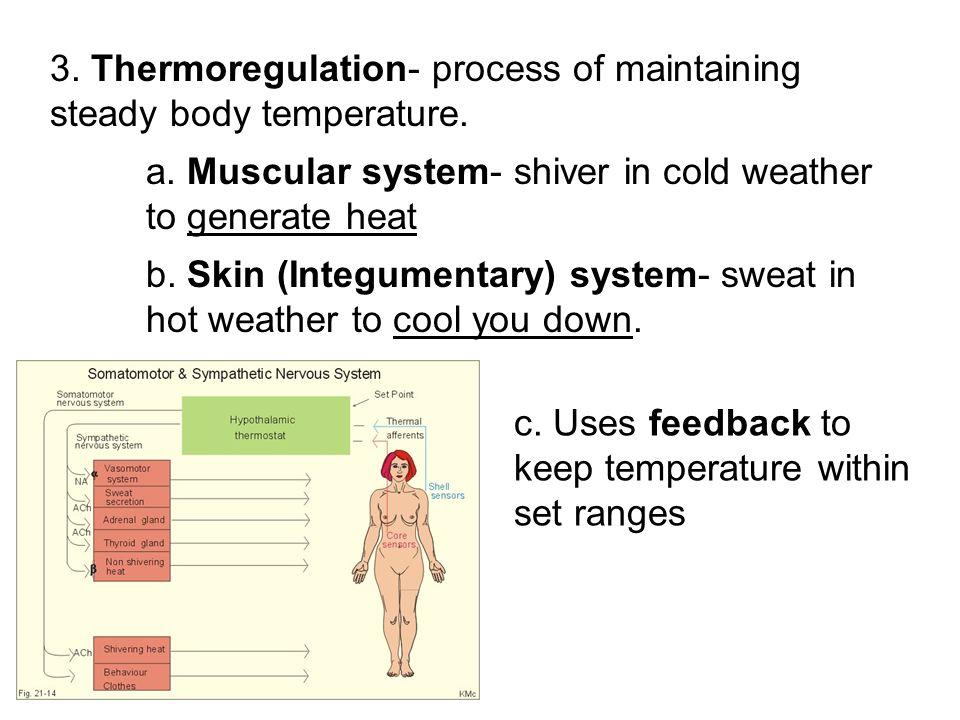 Chapter 28: Human Systems and Homeostasis