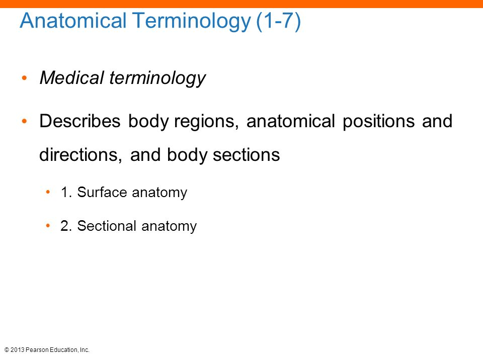 Medical Terminology Human Anatomy Image collections - human anatomy ...