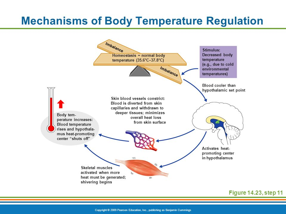 wire vw temp gauge diagram the digestive system and body metabolism - ppt video ...