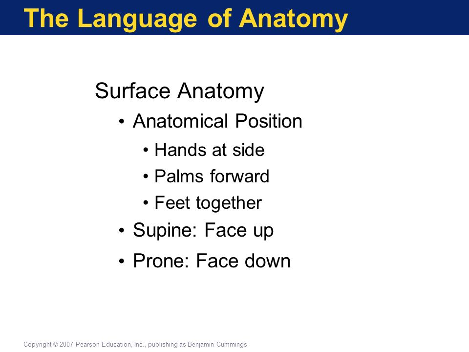 the language of anatomy This feature is not available right now please try again later.