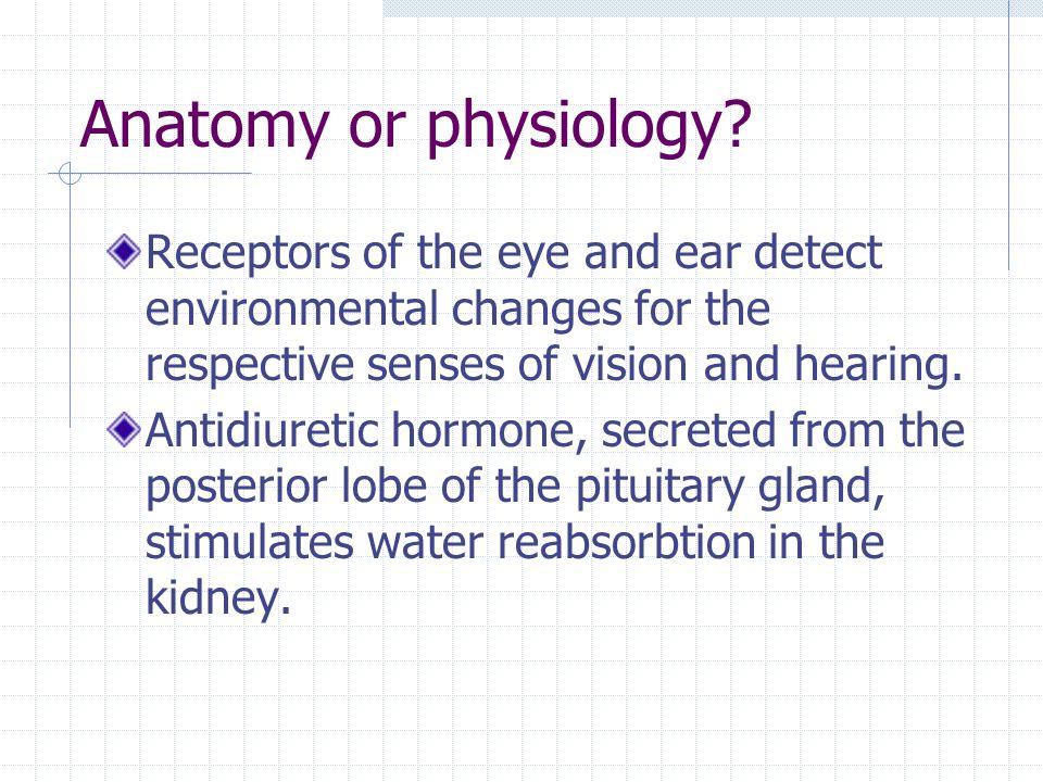 Großzügig Vision Anatomy And Physiology Bilder - Menschliche ...