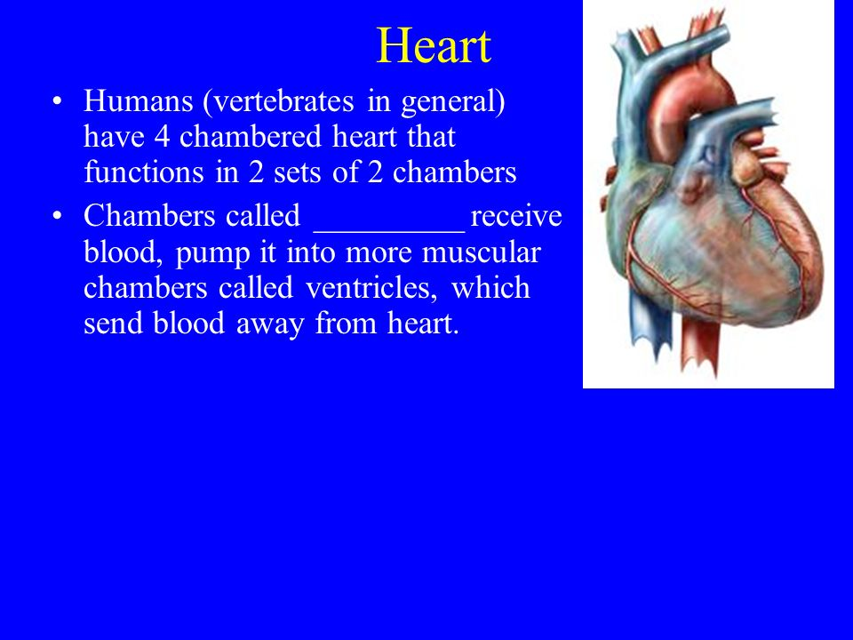 Respiratory System. - ...