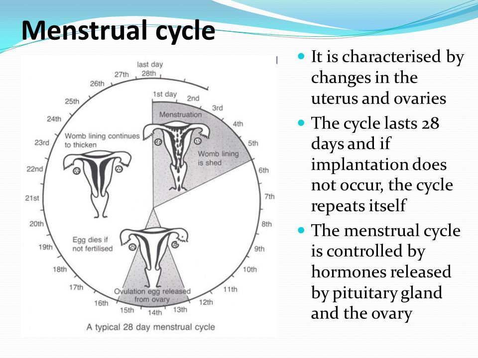 effect of the menstrual cycle on sleep pattern 11082014 whether your period is heavy, erratic, or missing altogether, your menstrual cycle issues could be due to one of these problems.