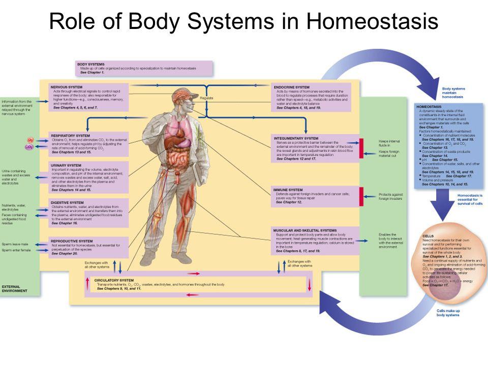 p5 anatomy and physiology homeostasis The importance of homeostasis in maintaining healthy functioning  the importance of homeostasis in maintaining  homeostasis  human anatomy and physiology.