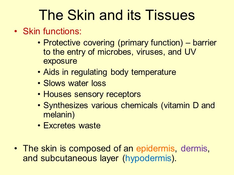 Ch 5 Integumentary System Ppt Video Online Download