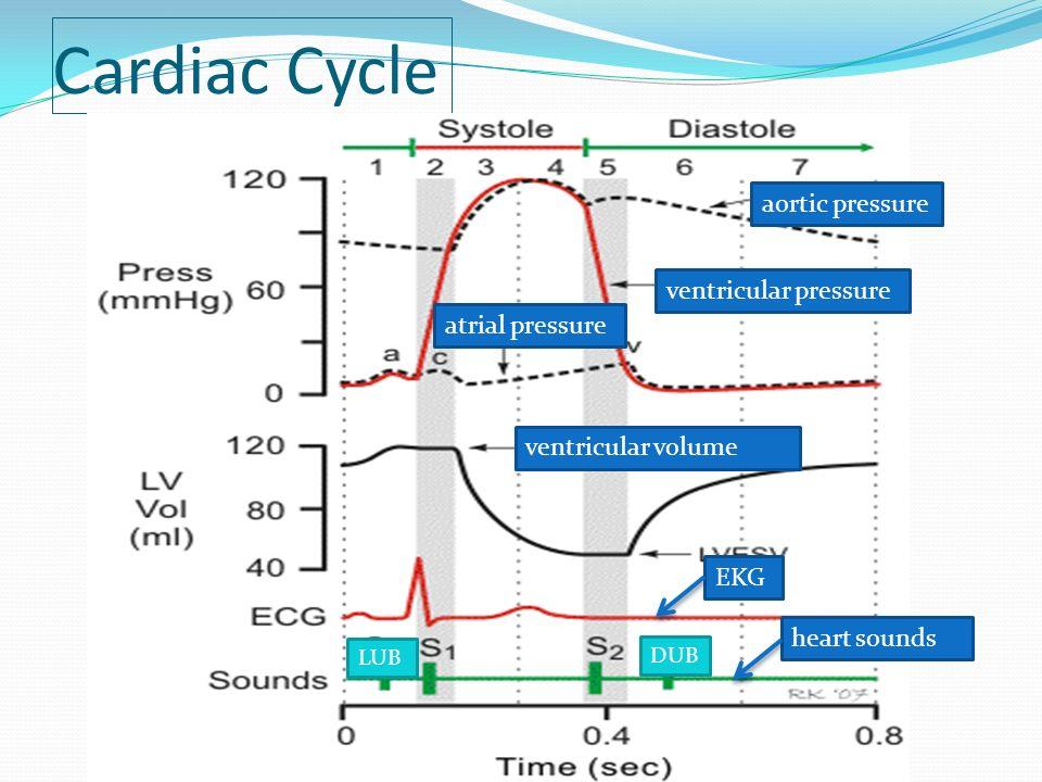Cardiac Cycle aortic pressure ventricular pressure atrial pressure