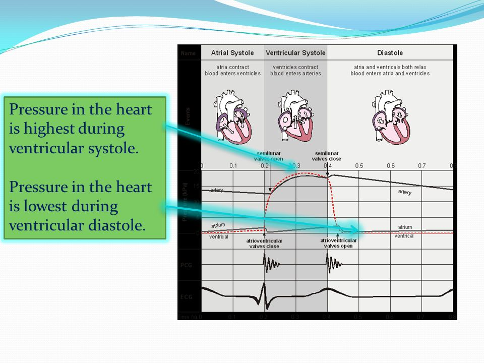 Pressure in the heart is highest during ventricular systole.