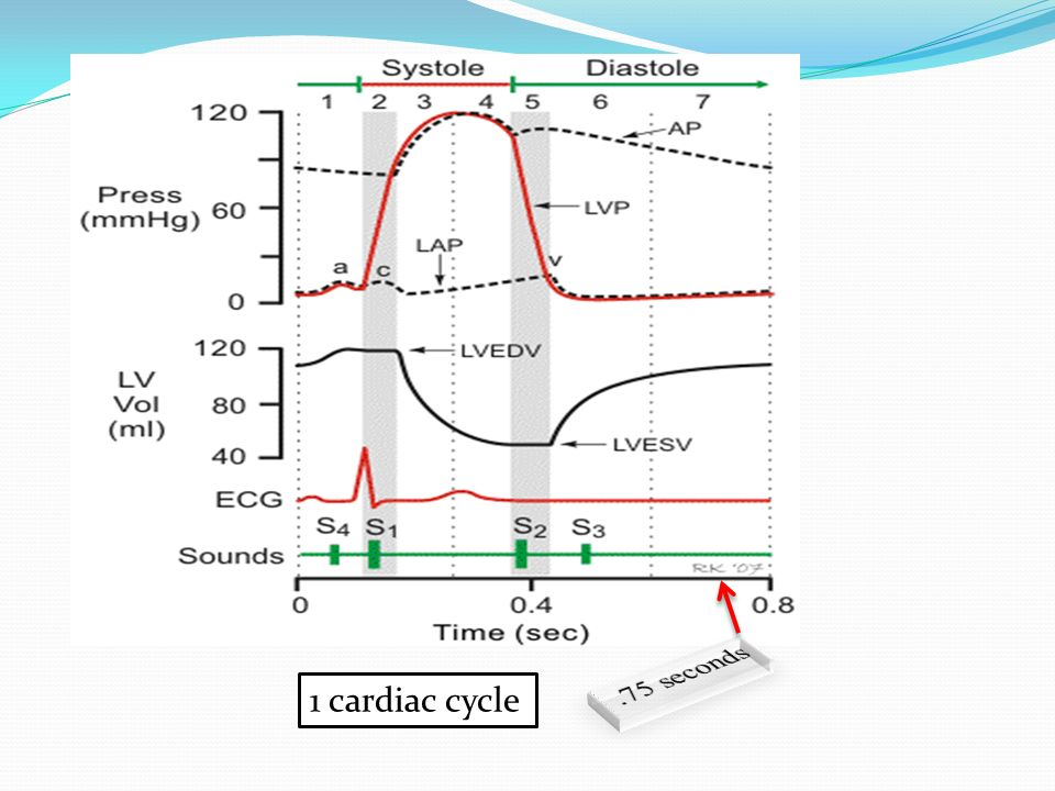 .75 seconds 1 cardiac cycle