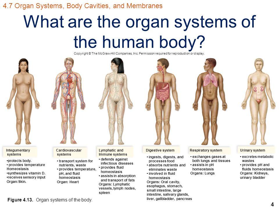 Human Biology Sylvia S. Mader Michael Windelspecht - ppt ...