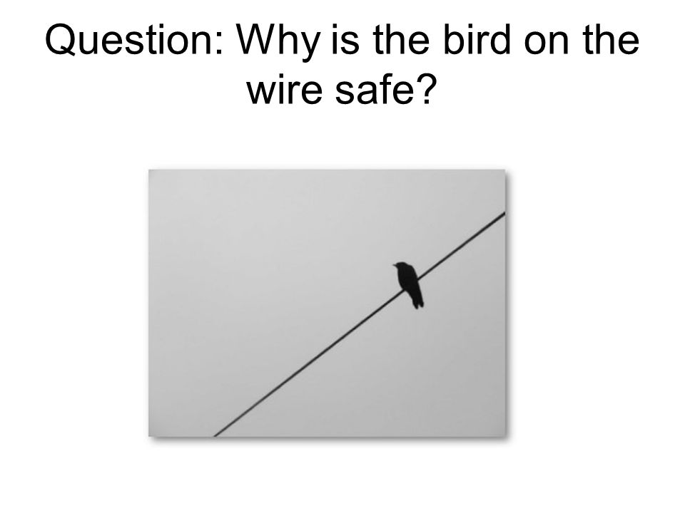 Question: Why is the bird on the wire safe