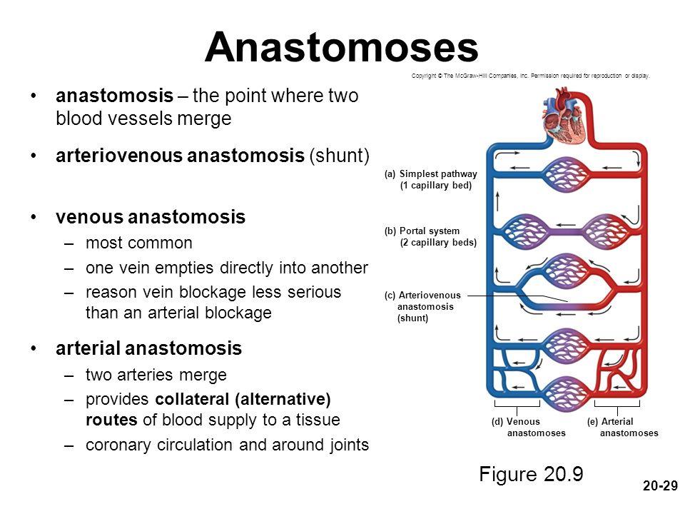 vascular anastomosis