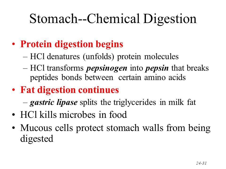 Stomach--Chemical Digestion