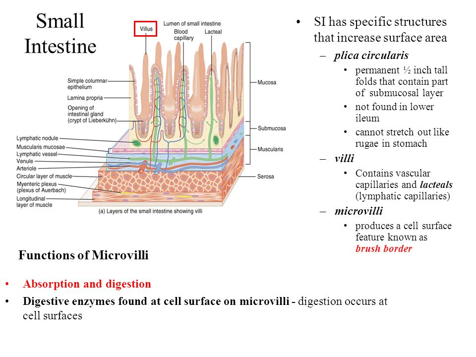 Functions of Microvilli
