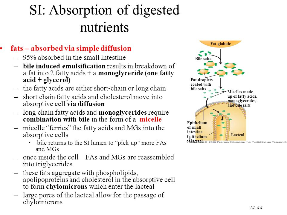 SI: Absorption of digested nutrients