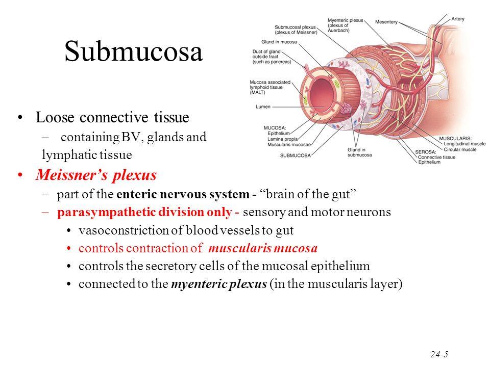Submucosa Loose connective tissue Meissner's plexus