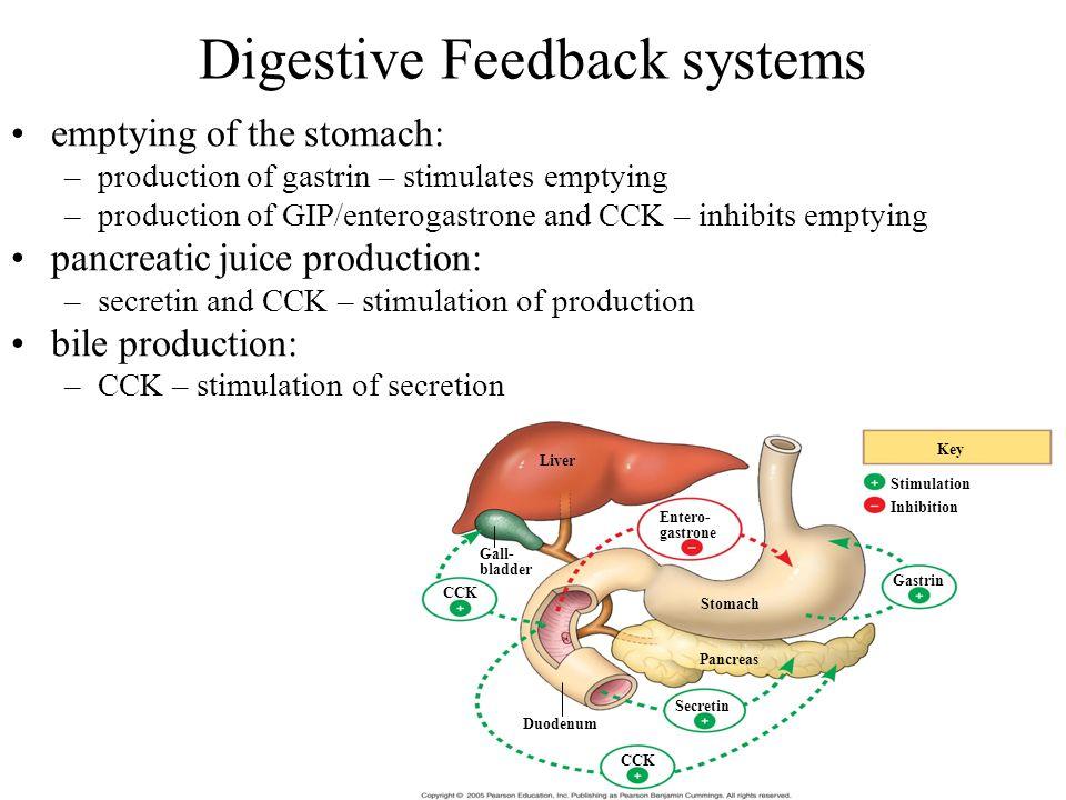Digestive Feedback systems