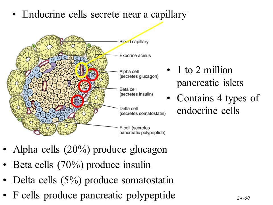 Endocrine cells secrete near a capillary