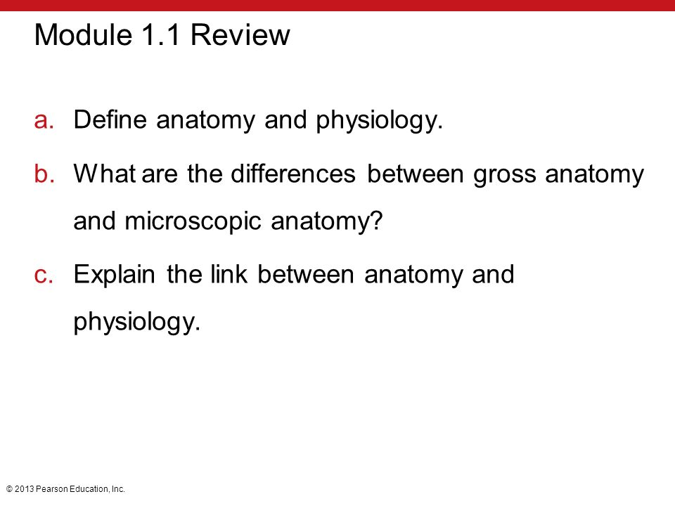 difference between anatomy and physiology Anatomy and physiology are like two sides of a sheet of paper: they describe the study of different things, but are so closely related that they're offered together.