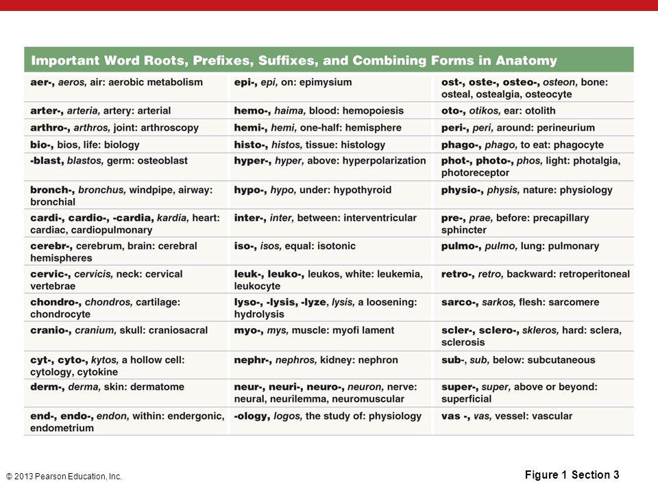 Gemütlich Anatomy And Physiology Module 1 Study Guide Bilder ...