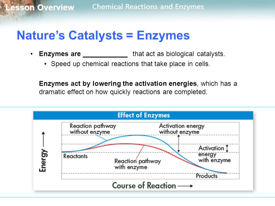 Nature's Catalysts = Enzymes
