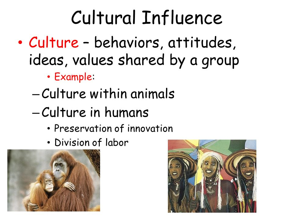 influence of cultural values on peoples behaviour Culture change is a term used in public policy making that emphasizes the  influence of cultural capital on individual and community behavior  it is argued  that this cultural capital manifests into specific values, attitudes or social norms  which.