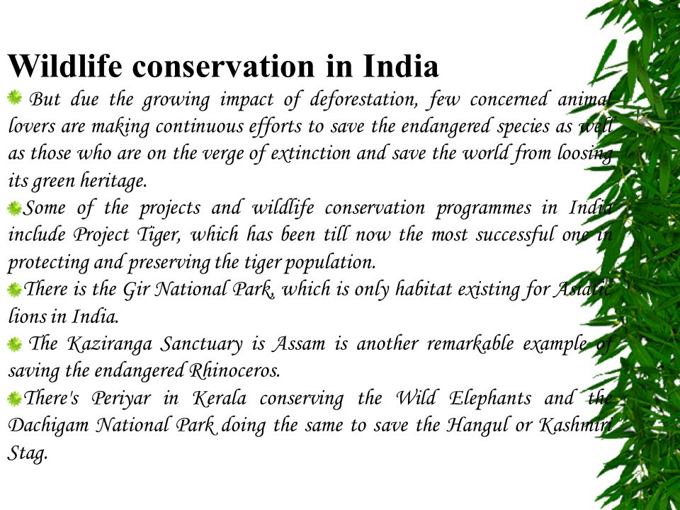 conclusion of wildlife conservation efforts in india Wildlife conservation projects and programs: to promote wildlife awareness among the people, the indian government has started various natural projects and programs such as project tiger, nature.