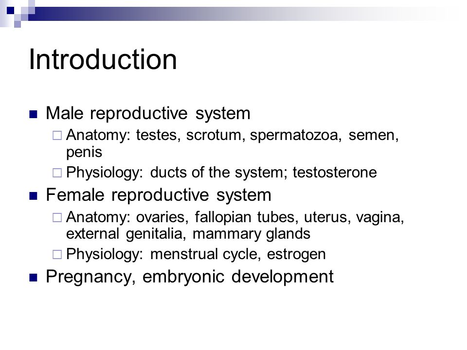 the reproductive system - ppt video online download, Muscles