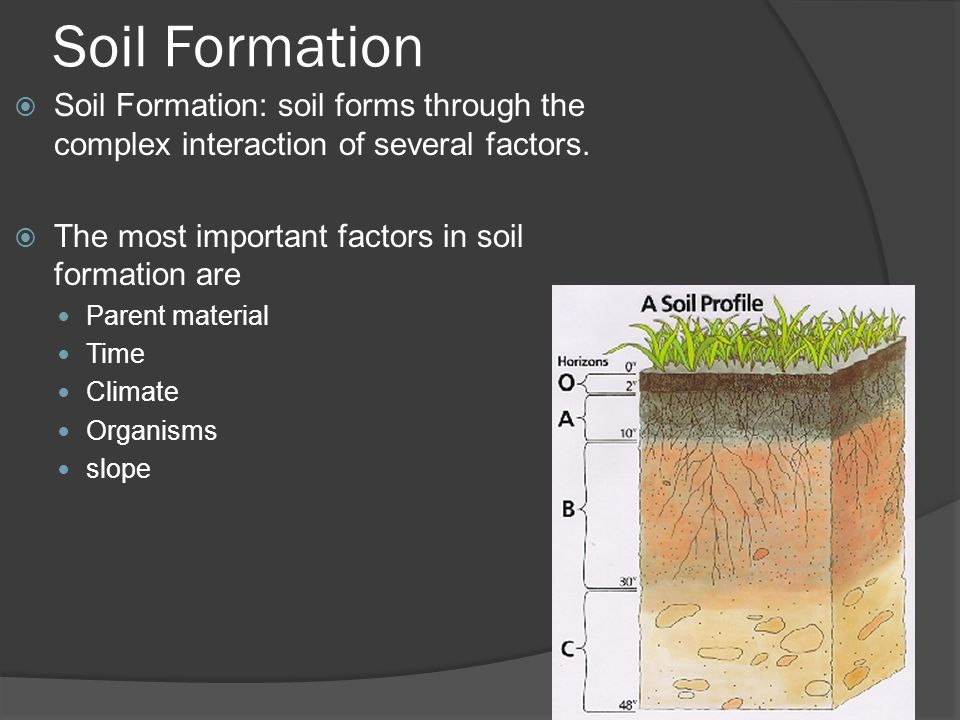 Earth science 5 2 soil soil ppt video online download for Soil forming factors