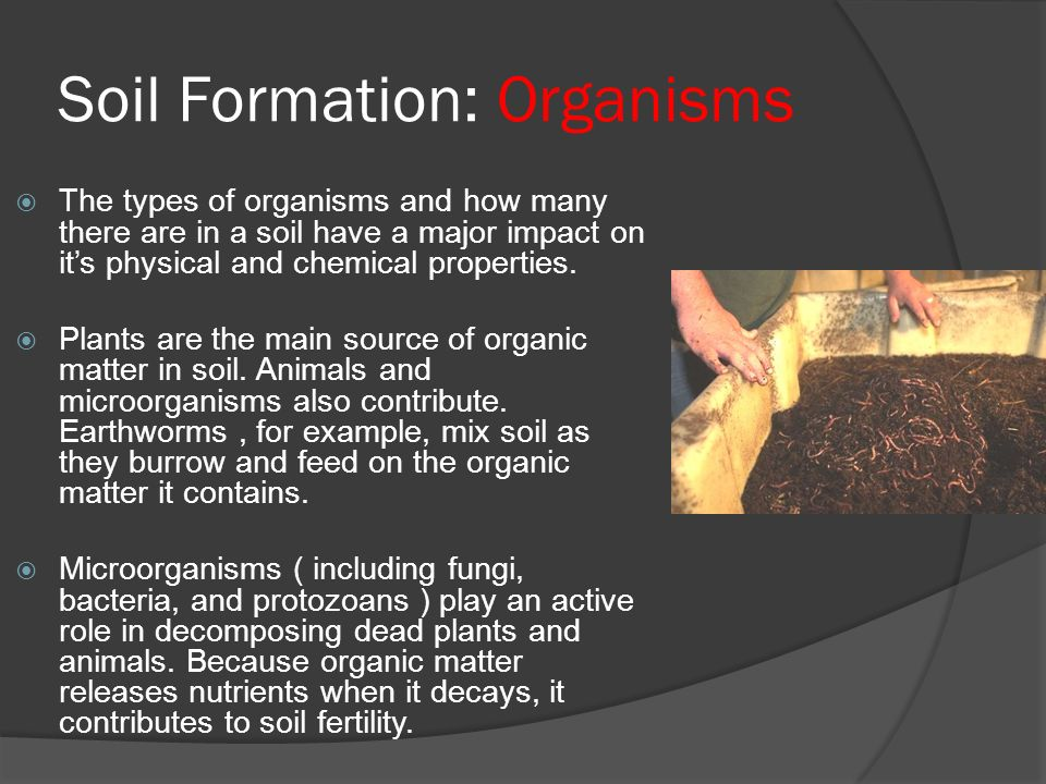 Earth science 5 2 soil soil ppt video online download for Meaning of soil formation