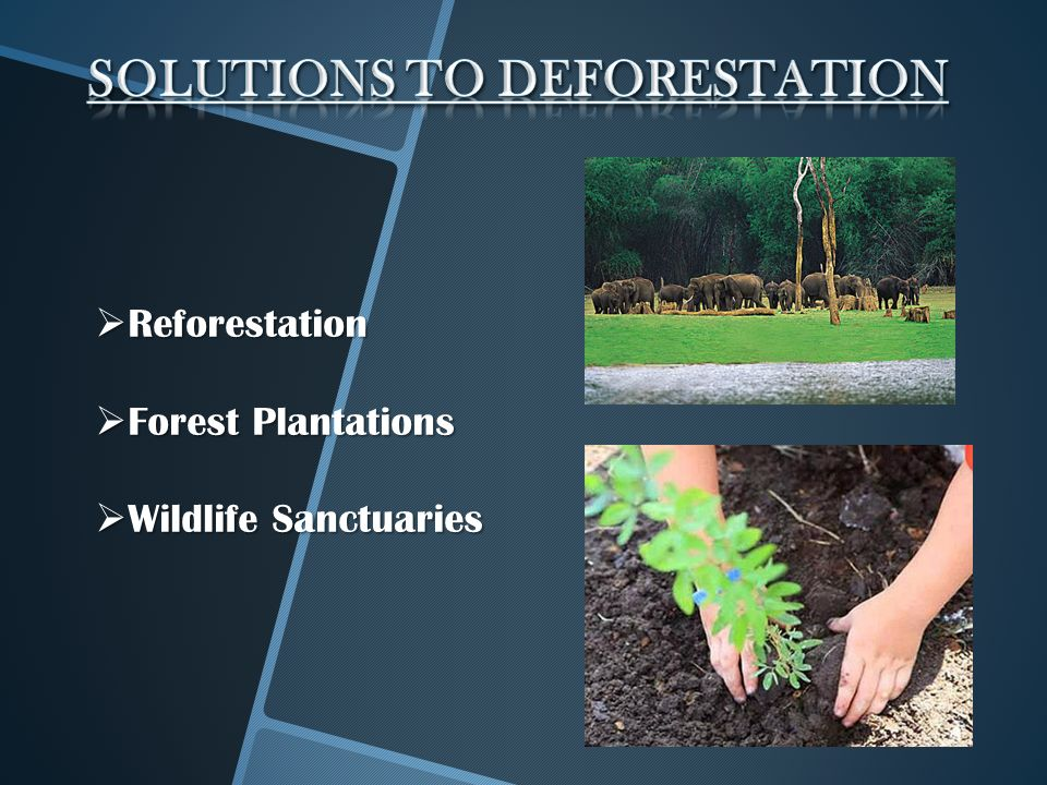 deforestation solutions Deforestation - causes, effects and solutions: deforestation in simple term  means the felling and clearing of forest cover or tree plantations in order to.
