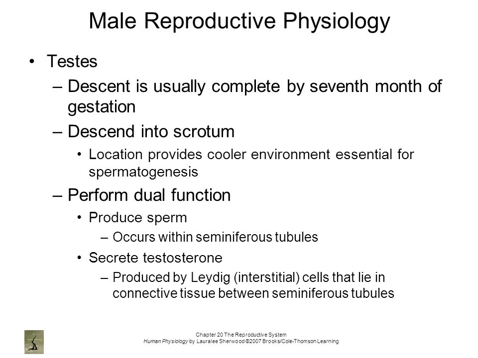 male reproductive physiology Anatomy and physiology form the foundation for physician practice, the understanding of disease pathology and pharmacology and are relevant to daily clinical care.
