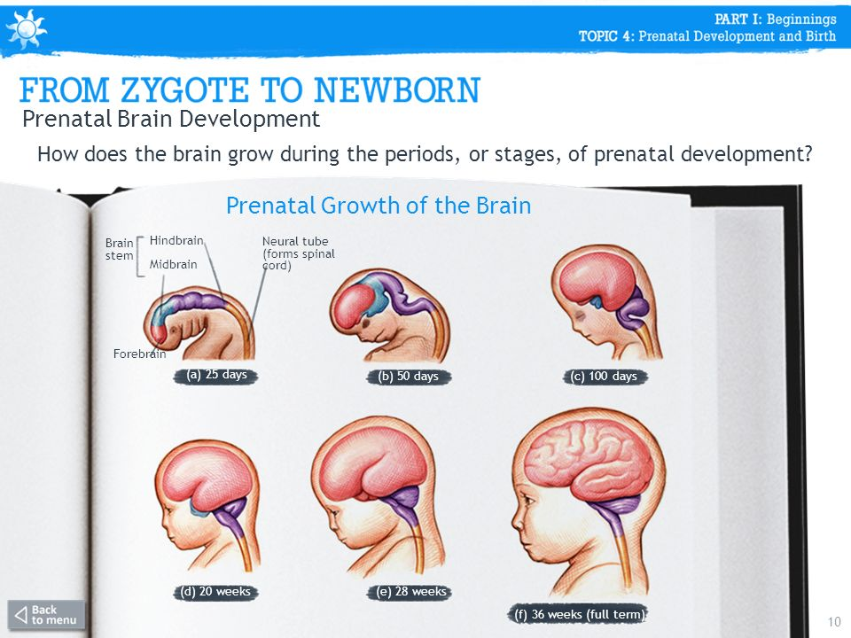 prenatal period Medical definition of prenatal development prenatal development: the process of growth and development within the womb, in which a single-cell zygote (the cell formed by the combination of a sperm and an egg) becomes an embryo, a fetus, and then a baby.