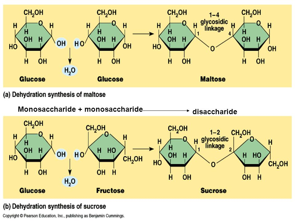 wht are the major monosaccharide found in the body 2017-12-10 is fructose bad for you  is one of the two major components  liver before it can be used by the body it's also found in various sugary sweeteners like.