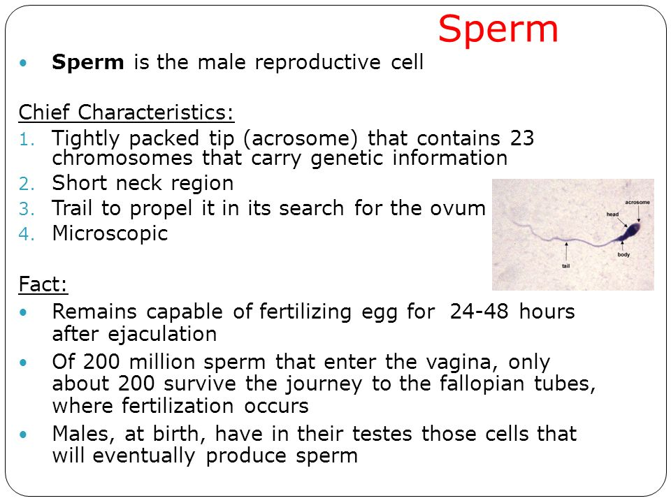 Sperm the journey of