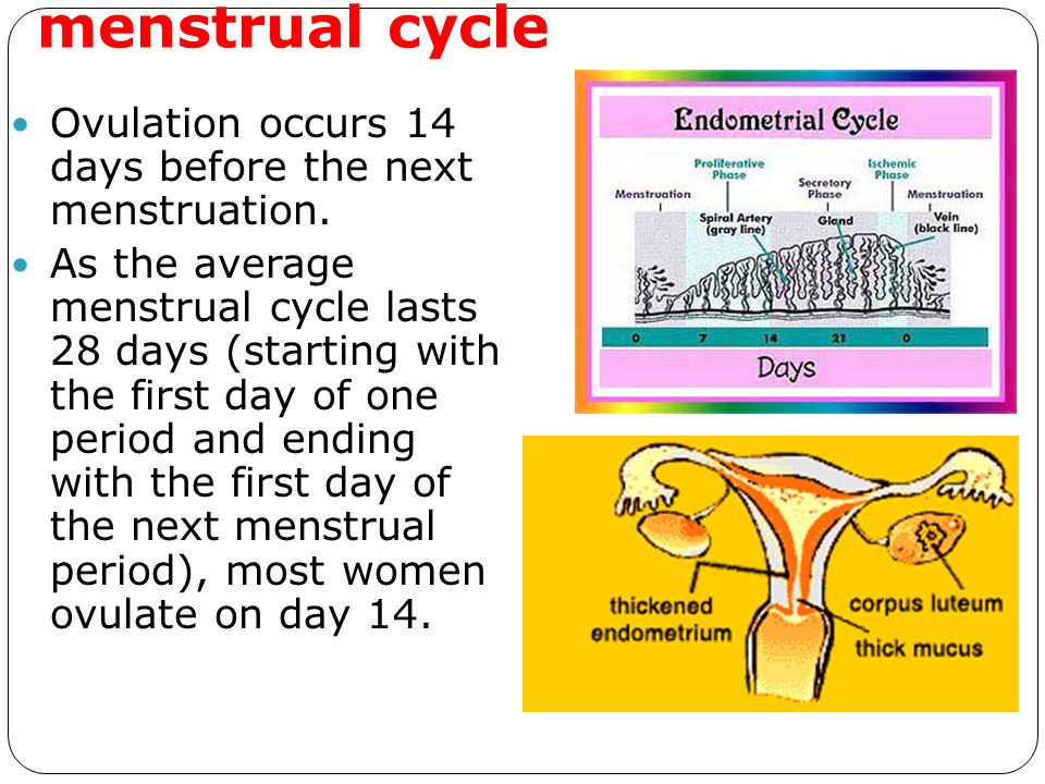 PRENATAL DEVELOPMENT. - ppt video online download
