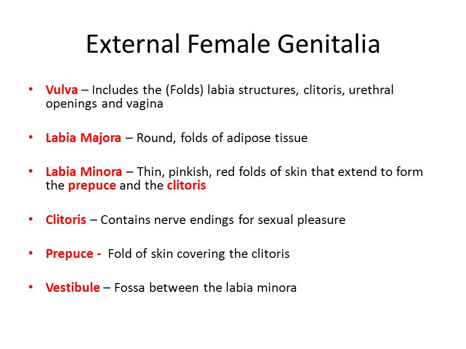 female genital system premed h&p. - ppt video online download, Human Body