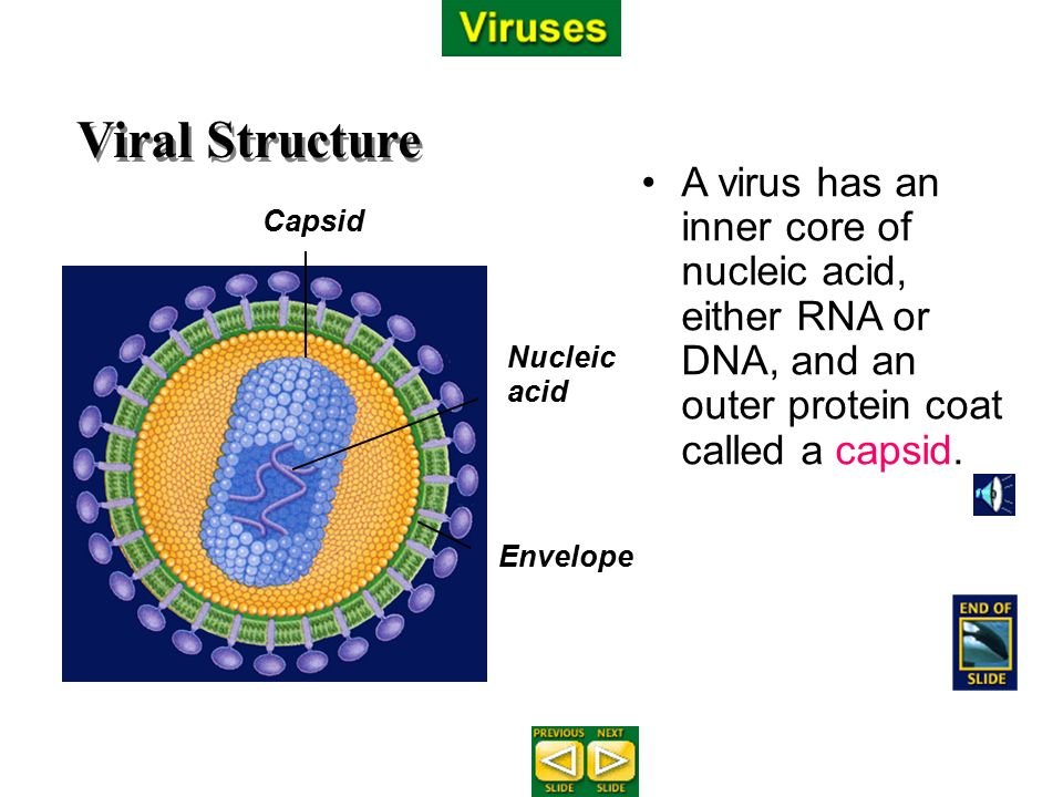 Viruses and Bacteria Chapter ppt download