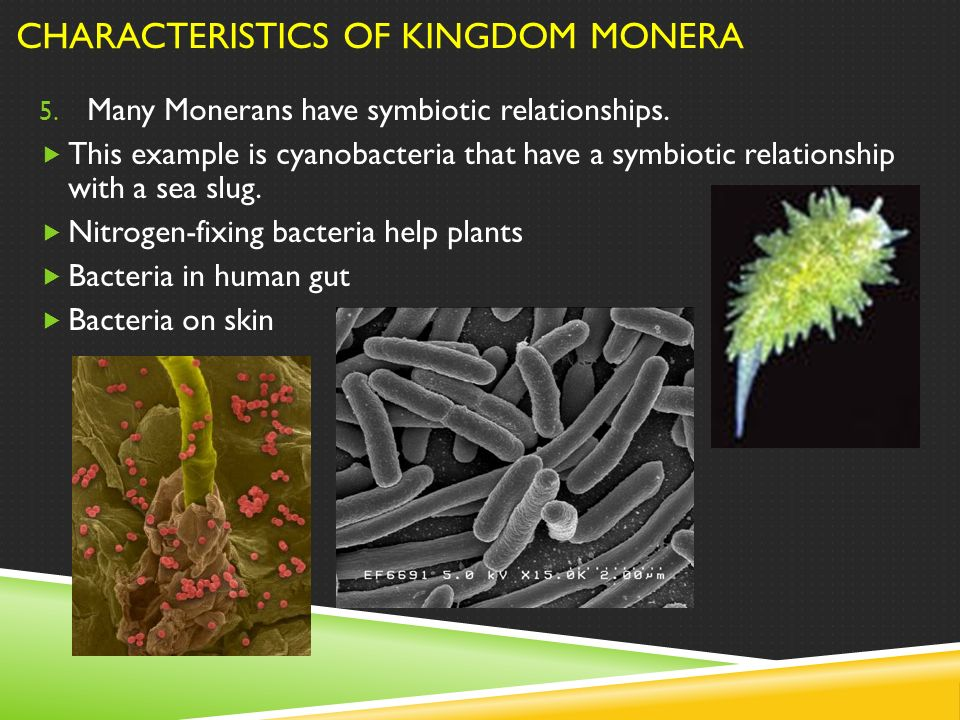 characteristics of monera In this chapter we will study characteristics of kingdoms monera  protista and  fungi of the whittaker system of classification the kingdoms plantae and.