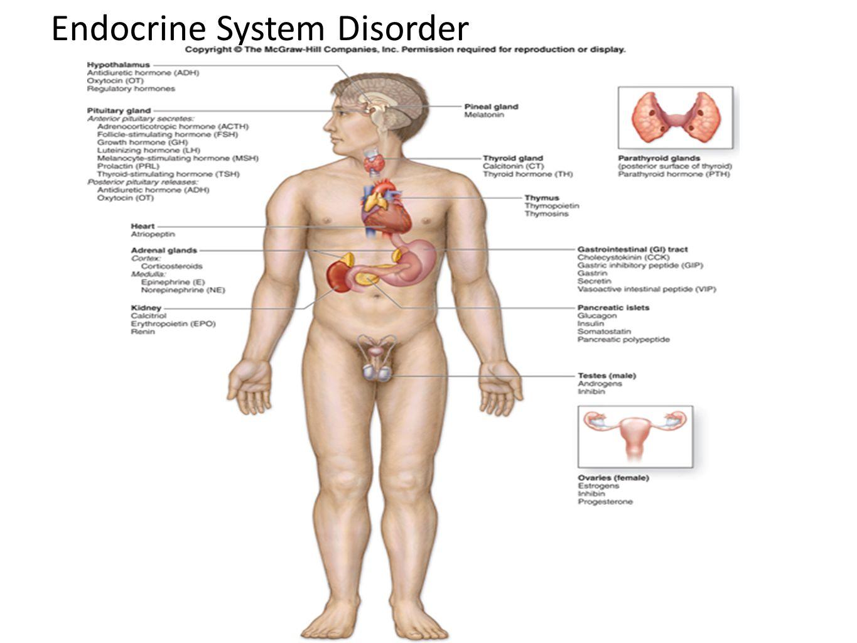 Groß Das Endokrine System Organe Fotos - Menschliche Anatomie Bilder ...
