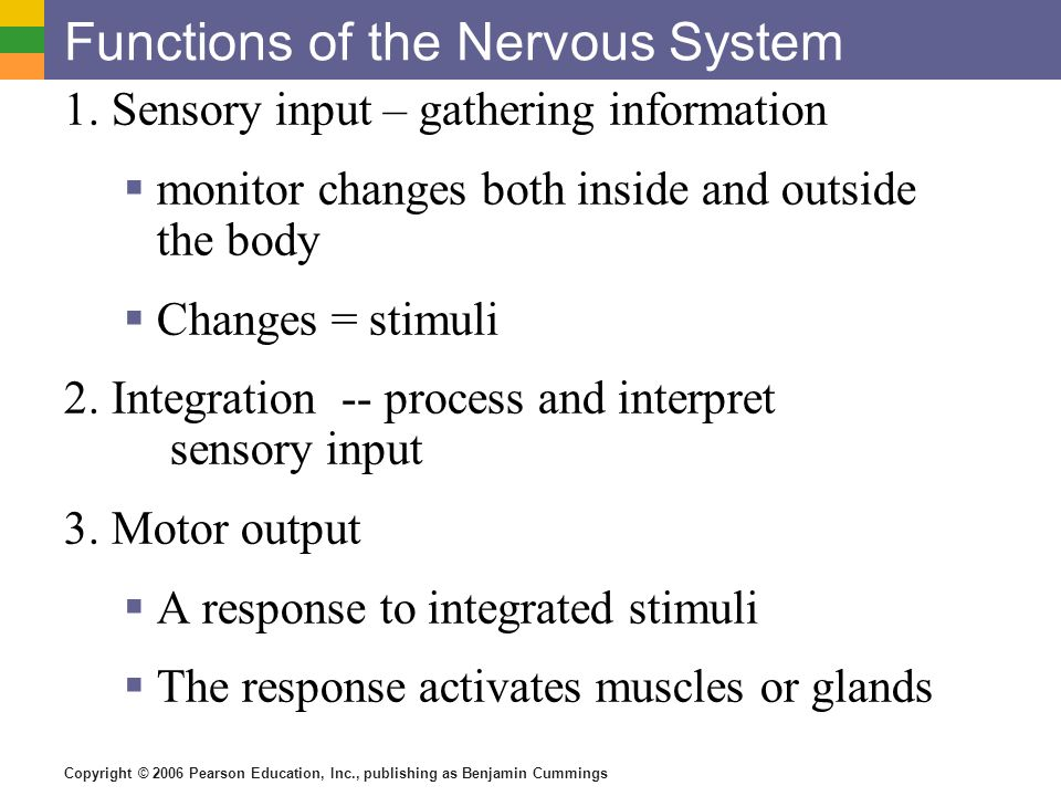 functions of the nervous system - ppt download, Cephalic Vein