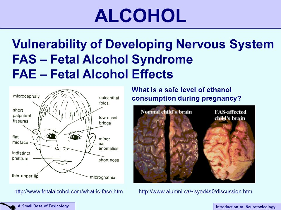 an analysis of the effects of alcohol on the nervous system The nervous system allows rapid transmission of information between different body regions, whereas, the endocrine system, which is a complex system of glands that produce and secrete hormones directly into the blood circulation, have longer lasting actions.