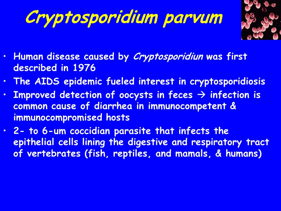 Cryptosporidium parvum transmission and infection