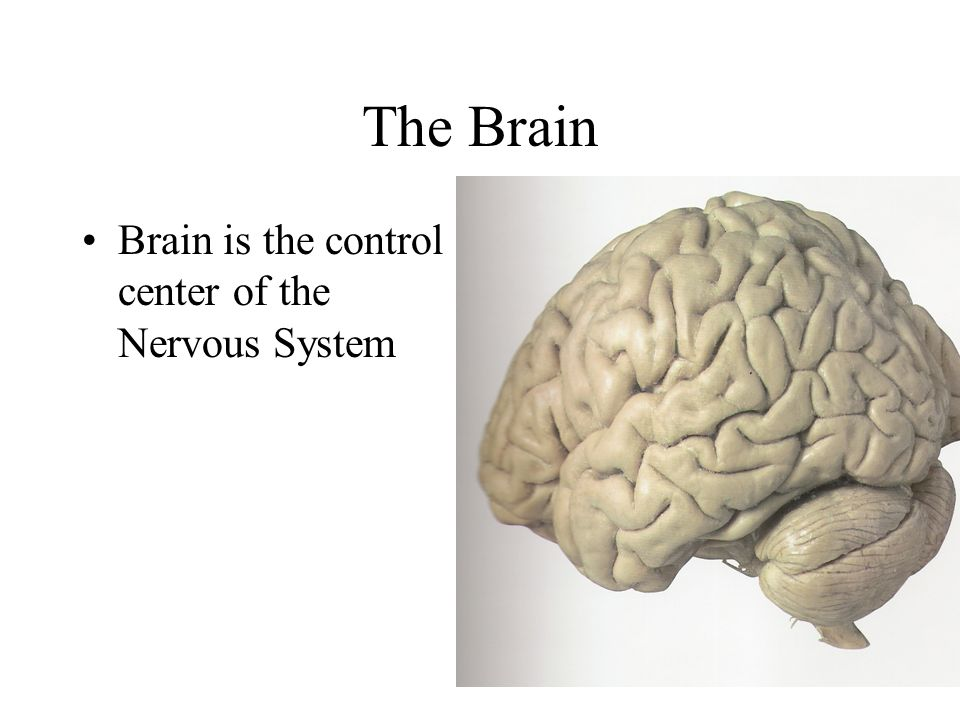 "the mysteries of the nervous system and the brain We have a ""second brain"" in our guts  the second brain is scientifically  known as the enteric nervous system (ens)  the ""second brain"" still holds  many mysteries, and the more scientists learn about it, the more complex."